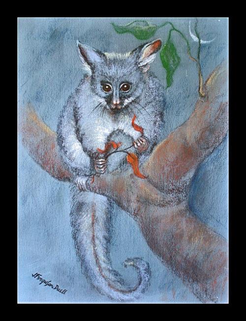 brush-tailed-possum-pastels-on-heavy-wc-paper-image-45-x-60-cm